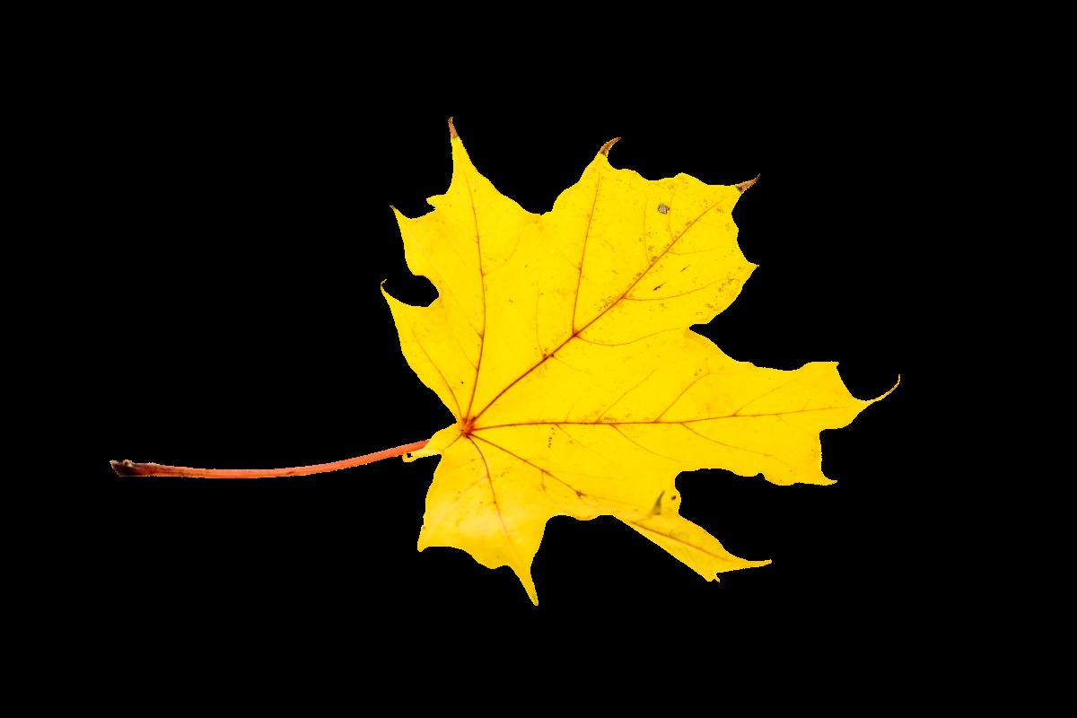 Autumn colorful fall color golden autumn #76477