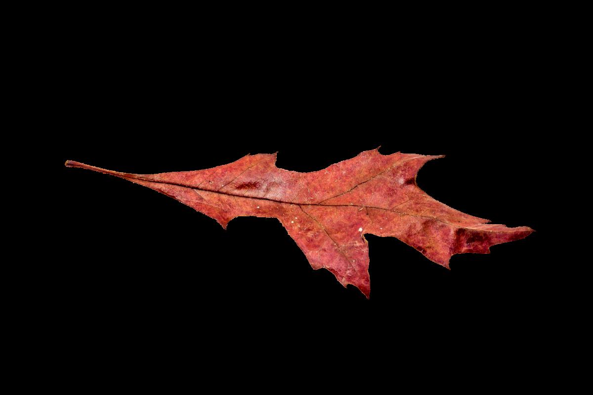 Autumn colorful fall color golden autumn #76493
