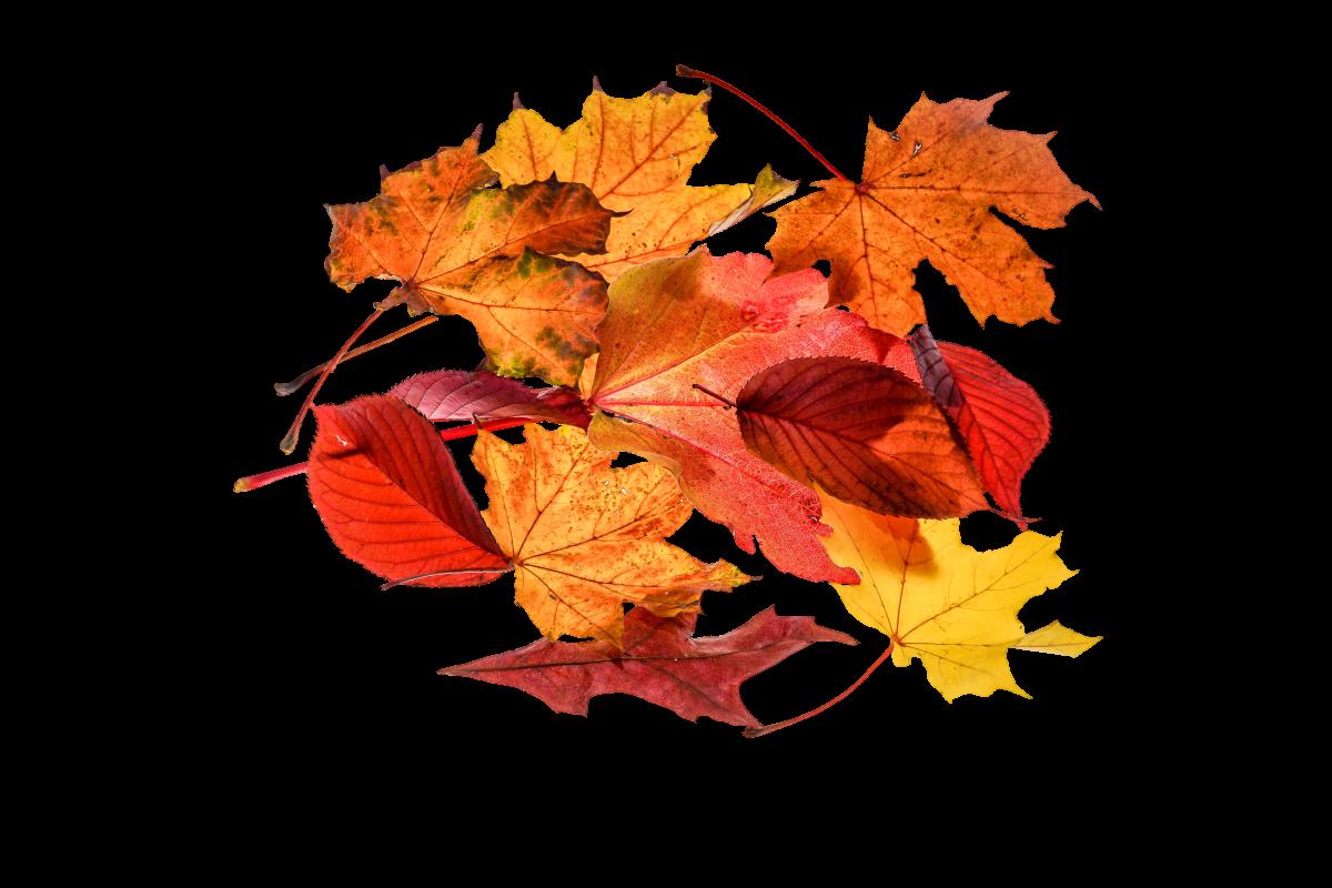 Autumn colorful fall color golden autumn #76499