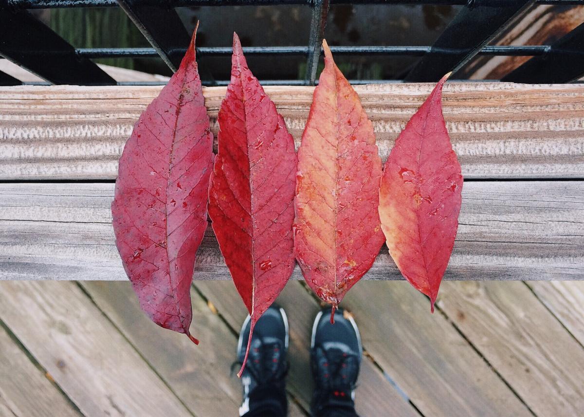 Autumn color fall leaves #76505