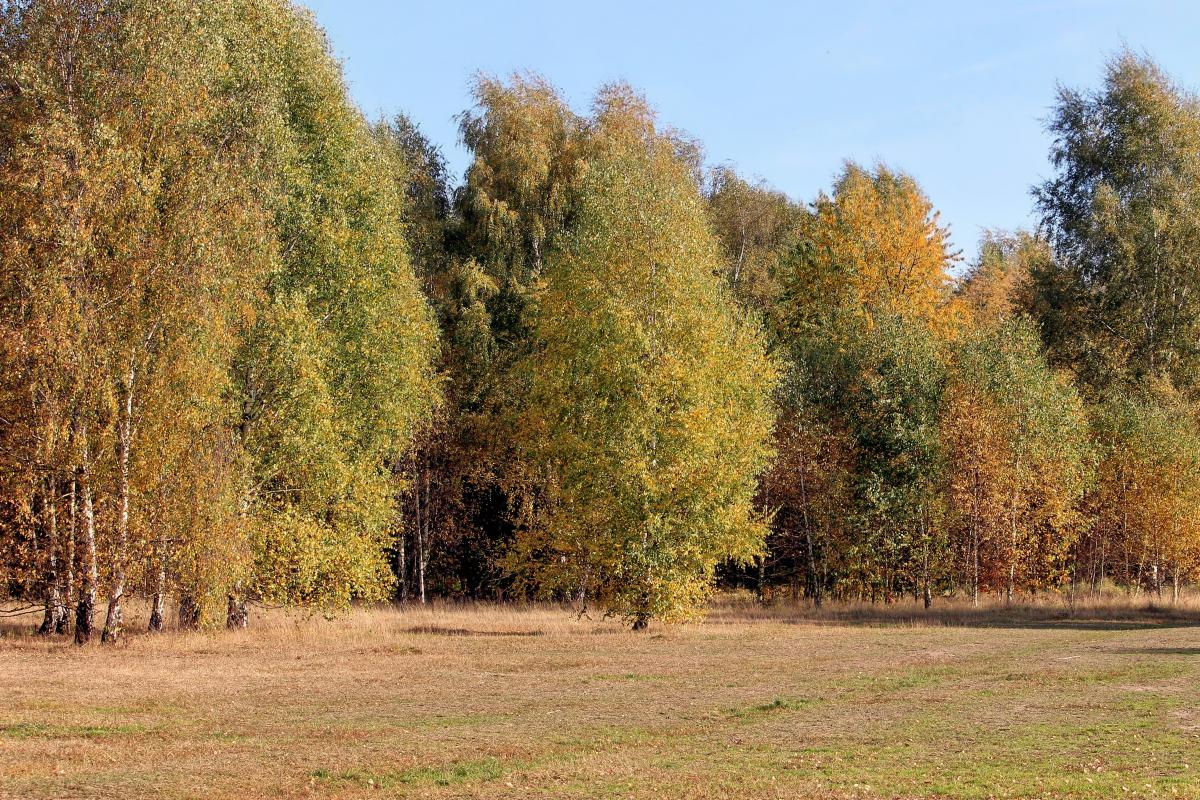 Autumn colours autumn mood fall color forest #76509