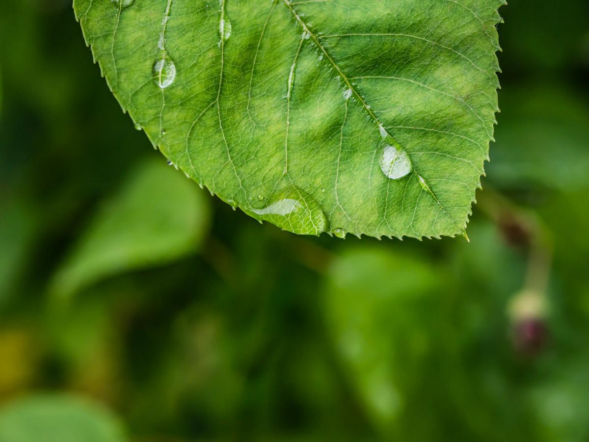 Close dew drop of water green