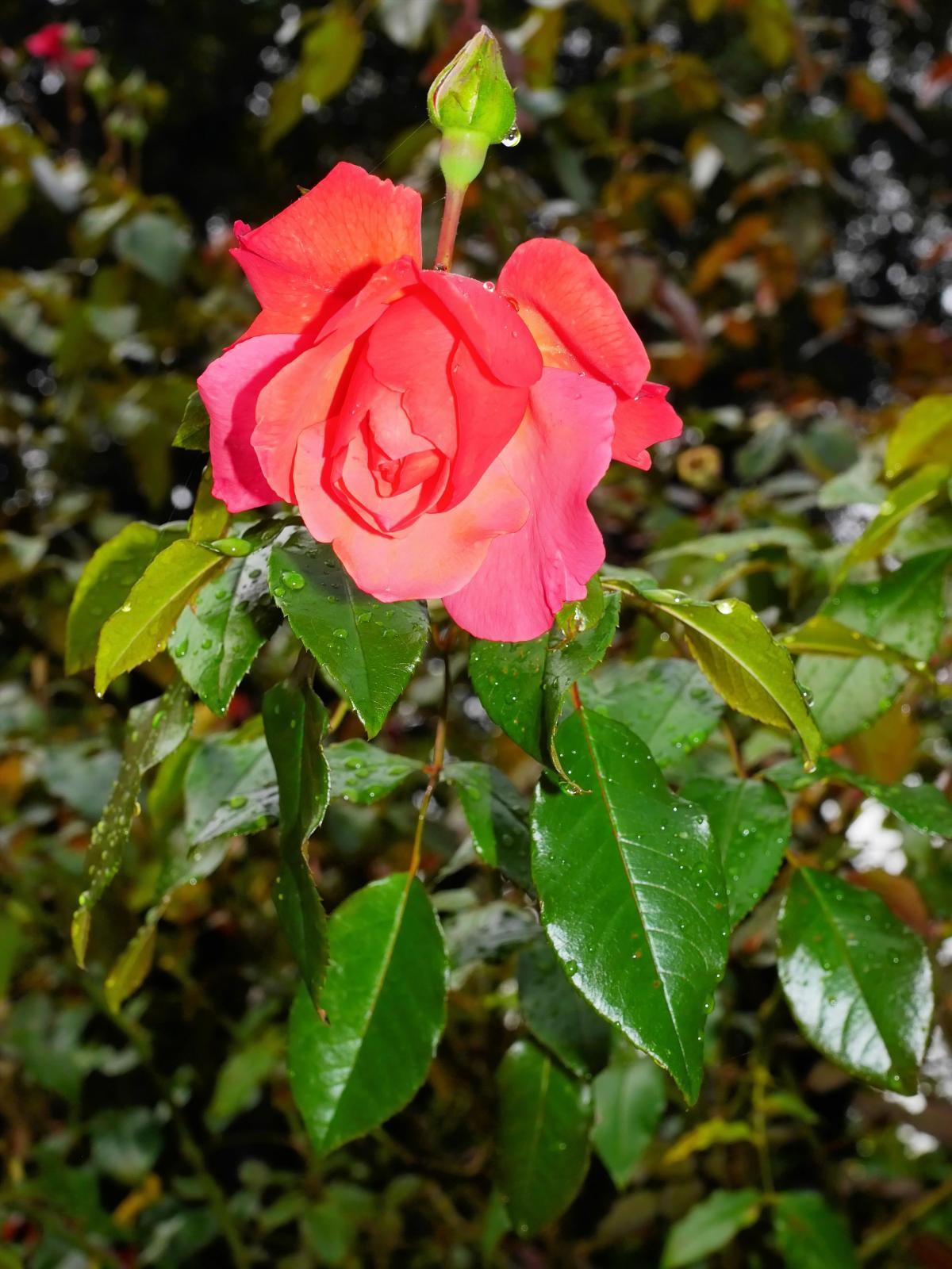 Bloom blossom close filigree