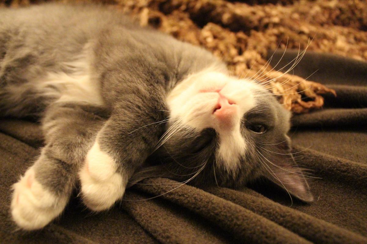 Adorable animal cute kitten #79663