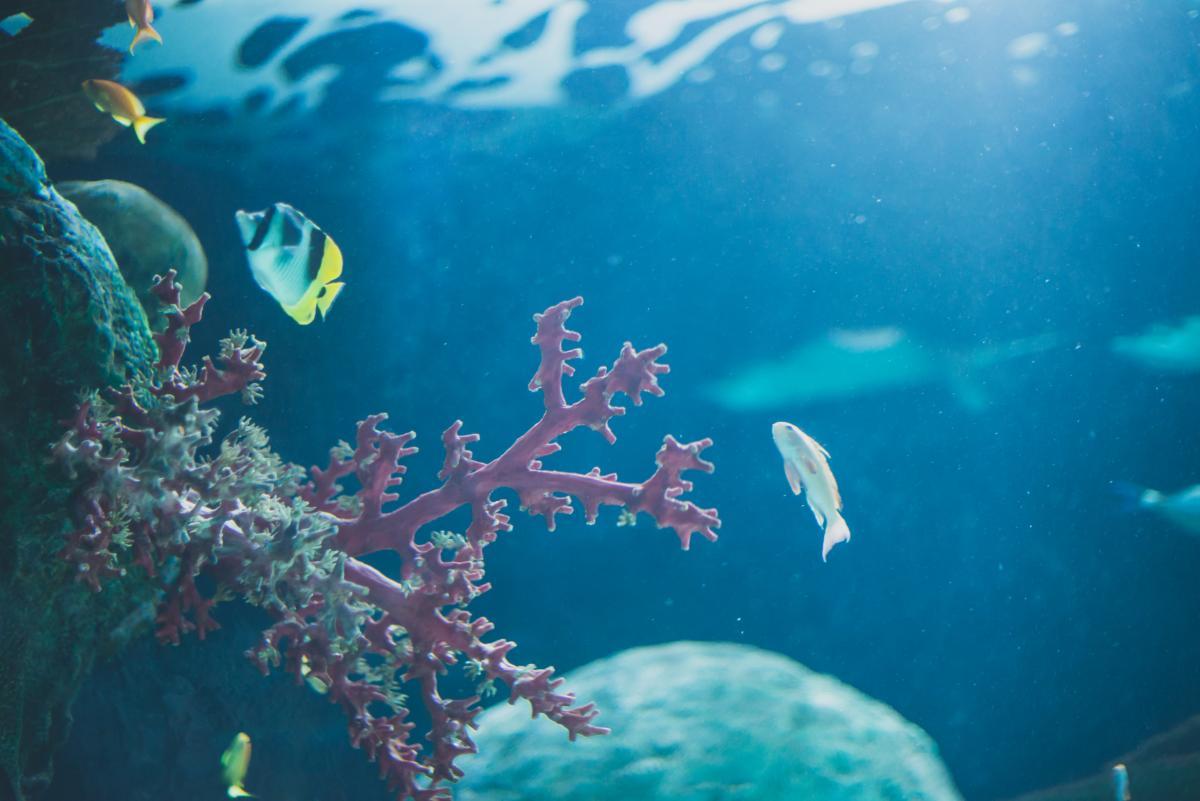 Coral fish ocean #80264