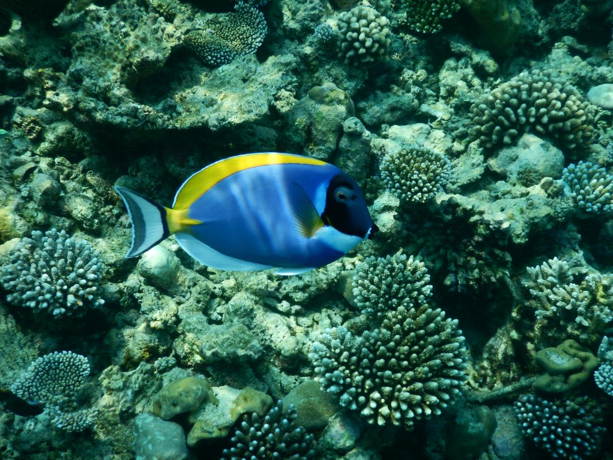 Free Blue colorful exotic fish #80393 Stock Photo | Avopix.com