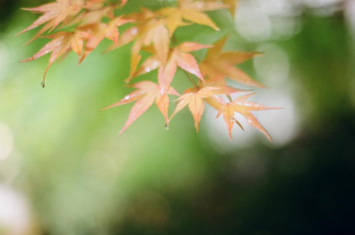 Autumn autumn leaves calendar leaves #80787