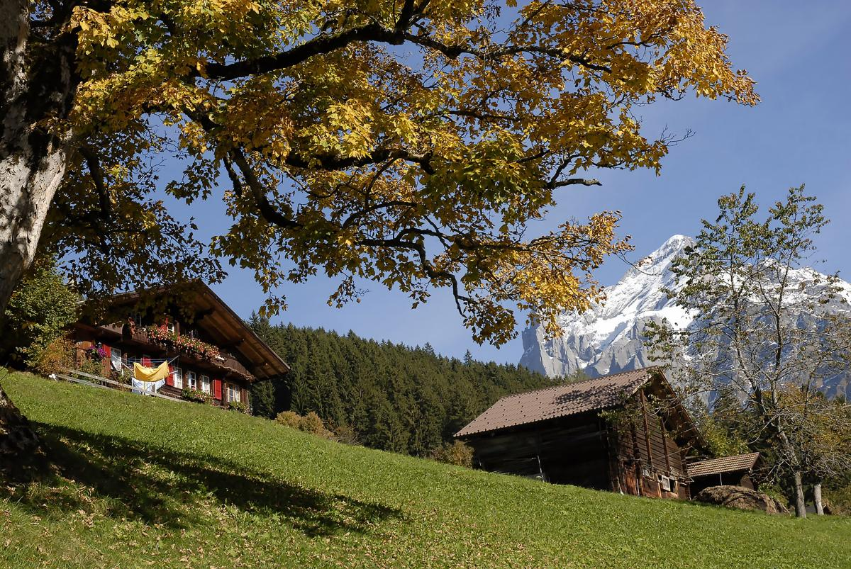 Alpine autumn autumn mood beautiful #80828