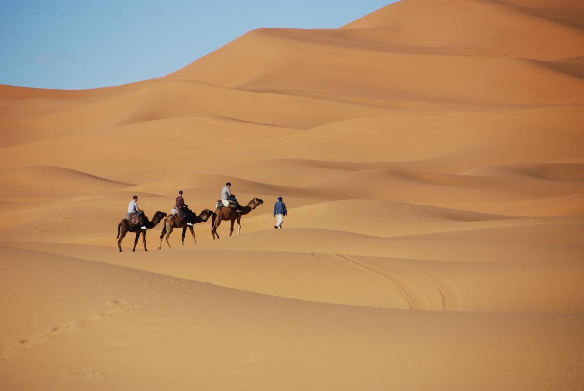 Camel desert dromedary dunes