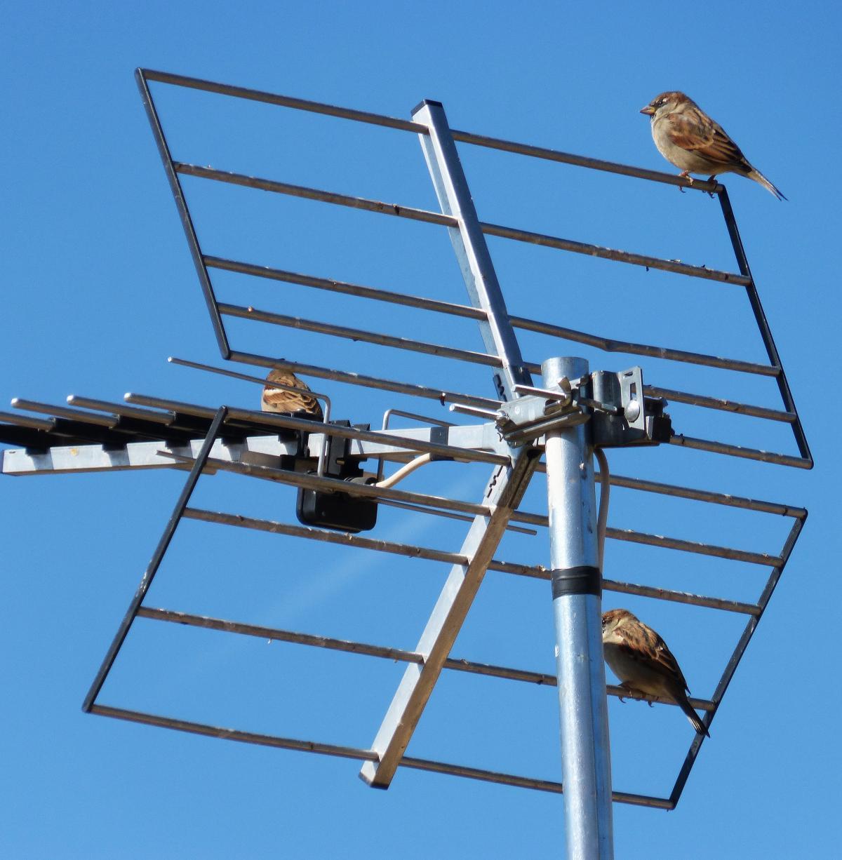 Antenna sky sparrows telecommunications #82509