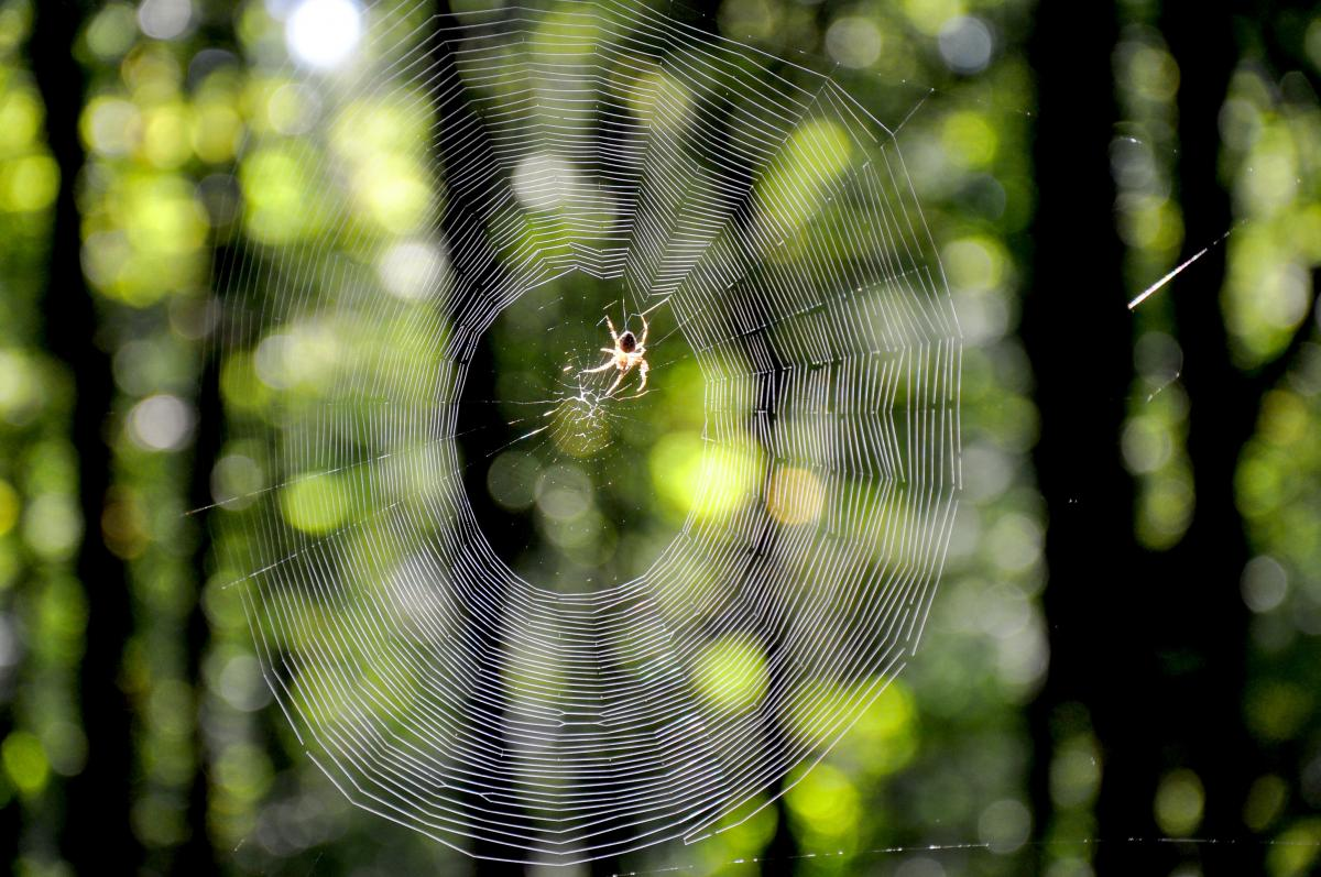 Autumn forest web