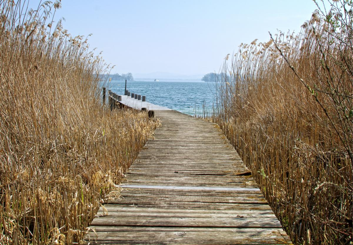 Bank beach boardwalk dock #83661