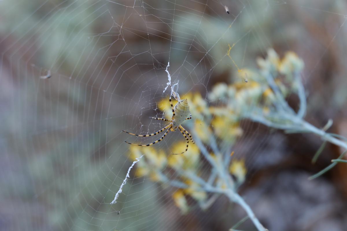Arachnid blur close up cobweb