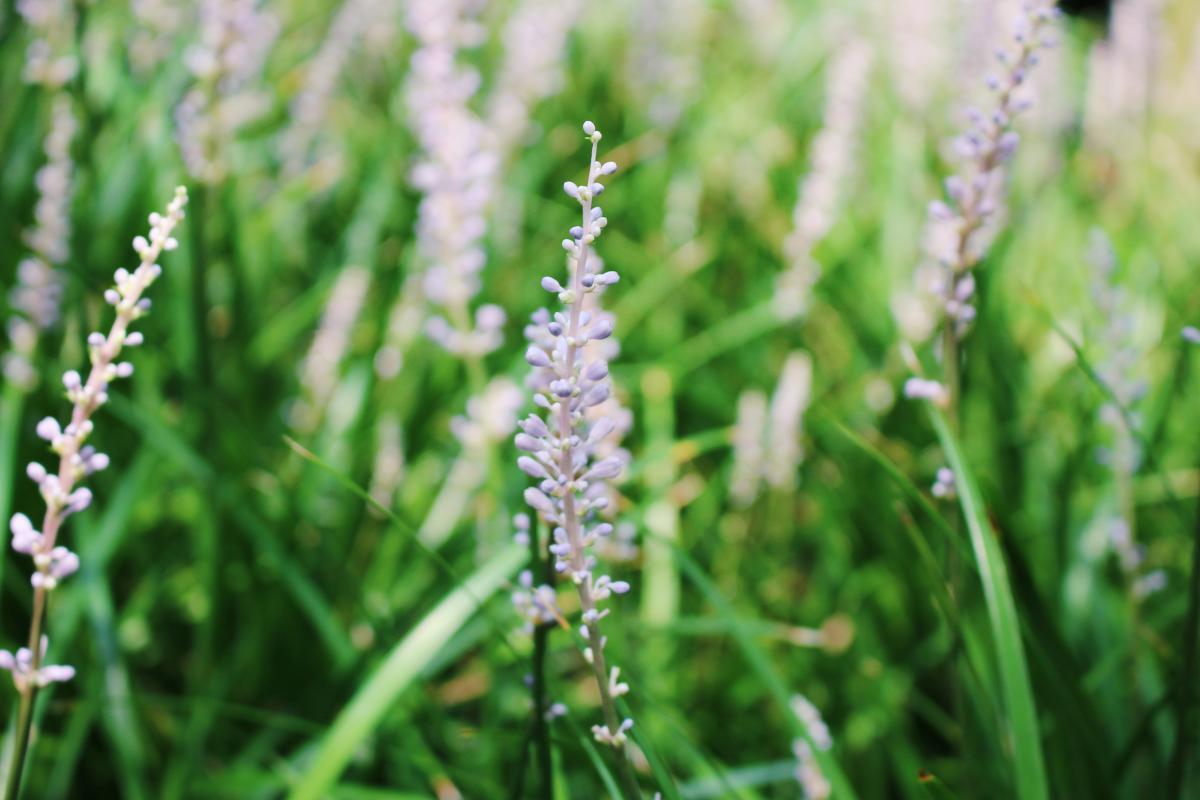 Flower green plants purple