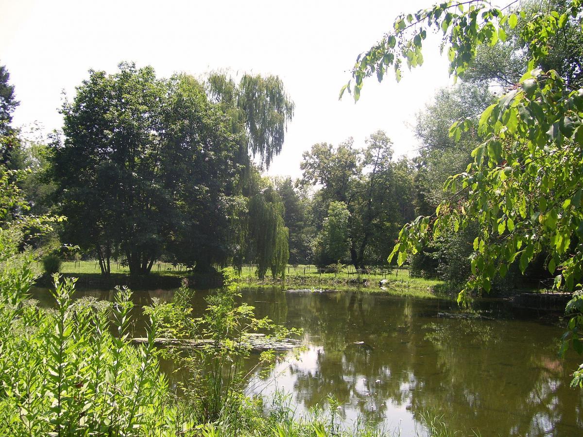 Green lake landscape summer #88116