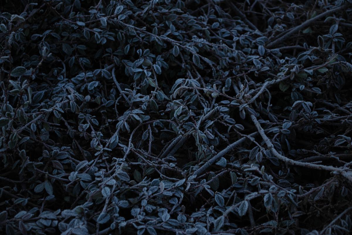 Blue cold freeze garden plant #88909