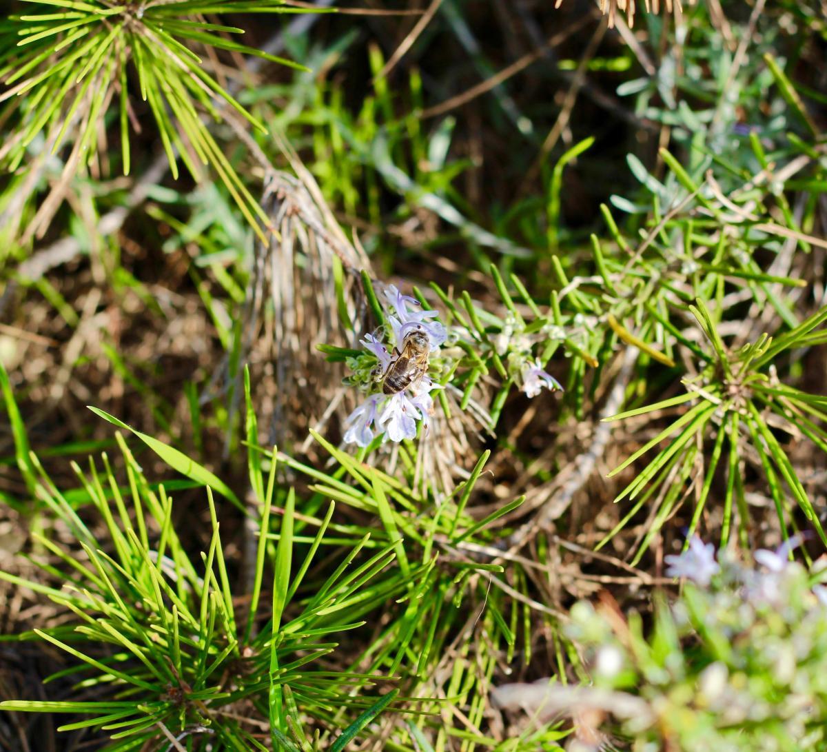 Plant Leaf Grass