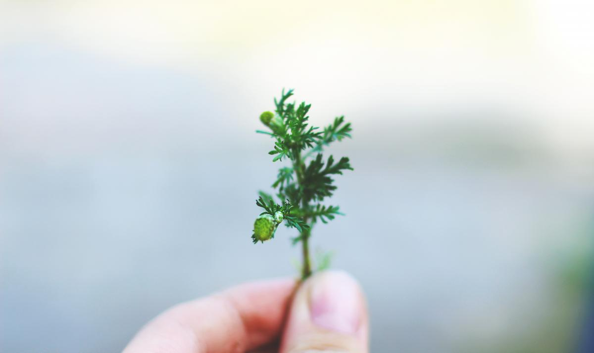 Leaf Plant Growth