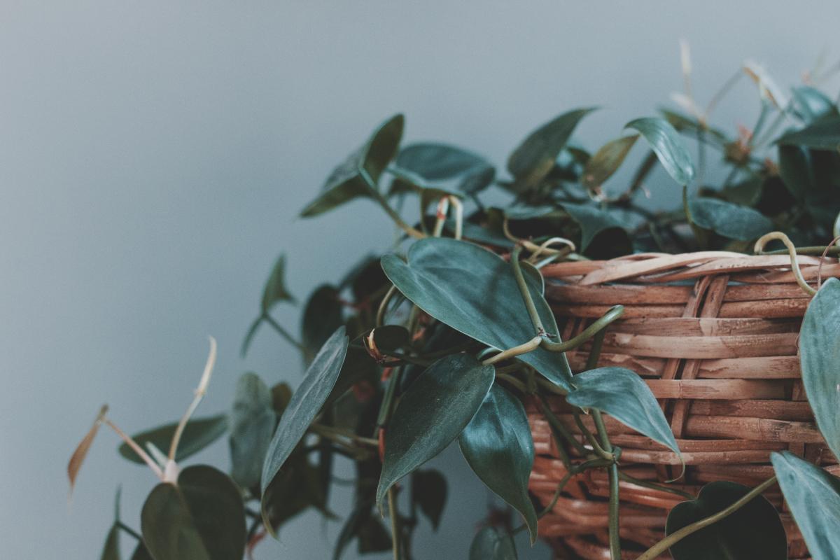 Plant Stalk Leaf #97938