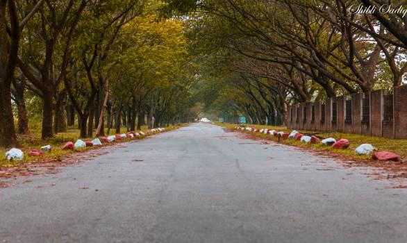 Road Landscape Trees #100077