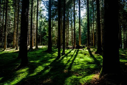 Forest Tree Landscape Free Photo