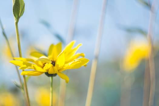 Yellow Flower Plant Free Photo