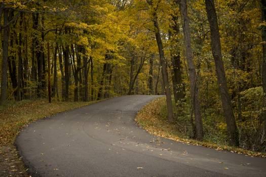 Road Avenue Asphalt Free Photo