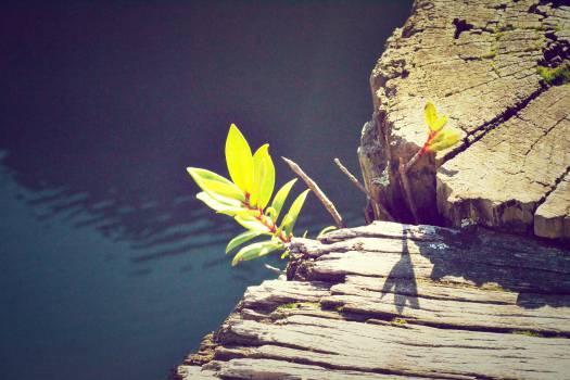 Summer Flower Plant #10182