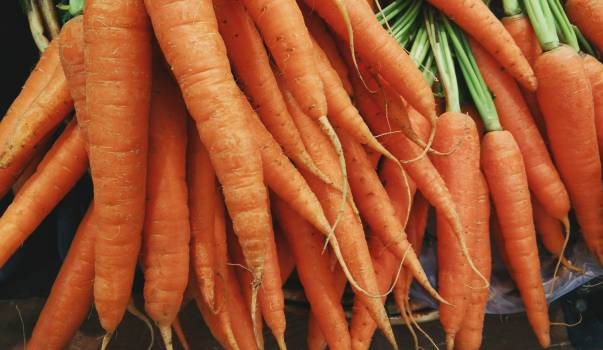 Carrot #10199