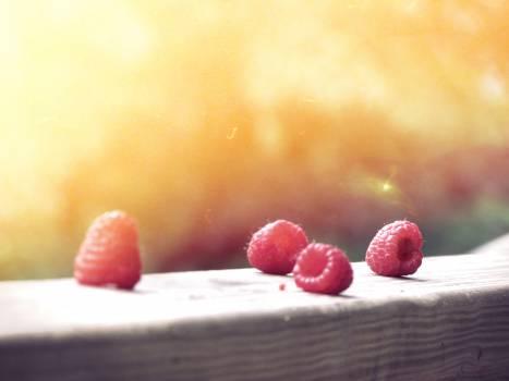 Food Sweet Dessert #10208