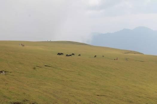 Plain Landscape Land #102432