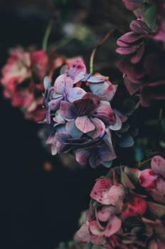 Flower Petal Pink #10243
