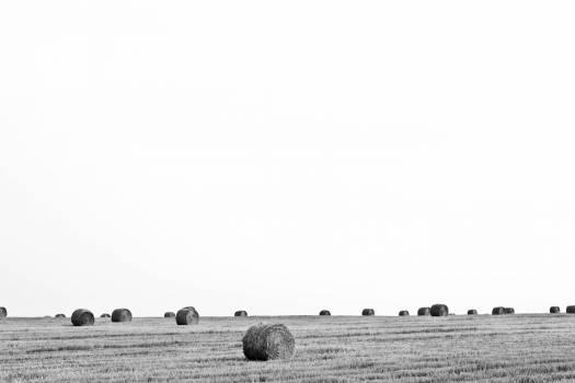 Hay Fodder Feed #10256