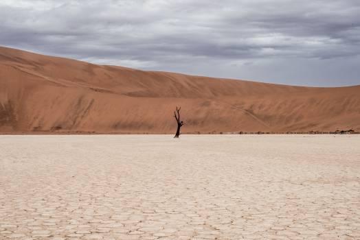 Dune Sand Desert #10291