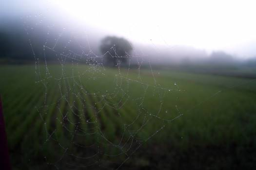 Trap Spider web Web #10313