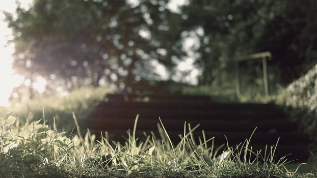Grass Plant Summer #10328