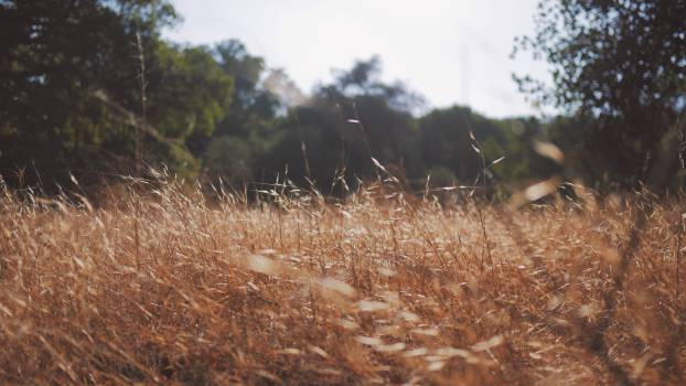 Field Grass Landscape #10339
