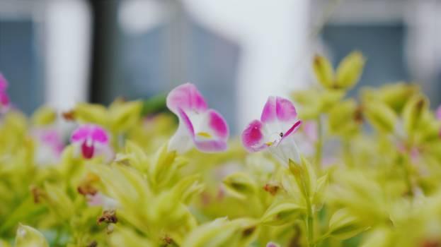 Flower Pink Petal Free Photo