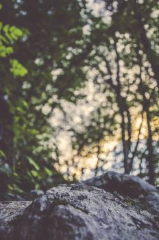 Tree Oak Forest #10356