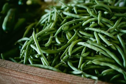 Plant Leaf Herb #10389