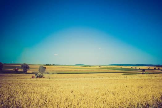 Field Grass Landscape #10390