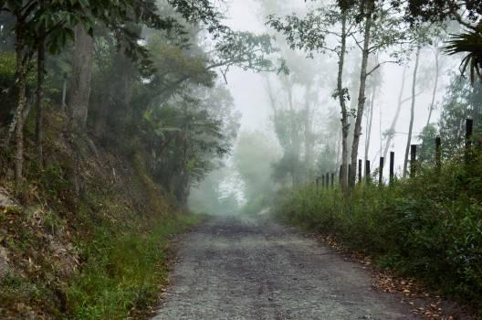 Spring Geyser Landscape #10395