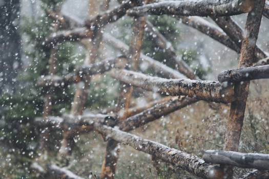Water snake Branch Arthropod Free Photo