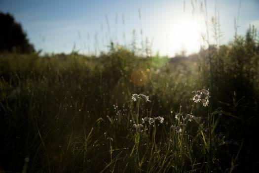 Grass Field Plant #10439