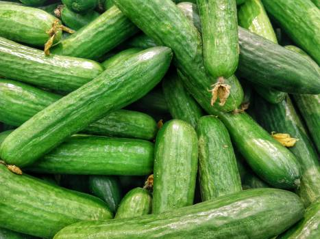 Vegetable Cucumber Produce #10474