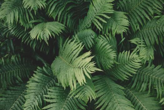 Fern Plant Leaf #10483