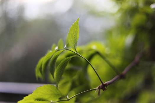 Plant Leaf Branch #104886