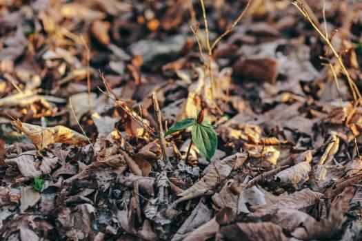 Plant Branch Leaf Free Photo