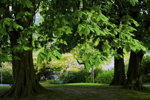 Tree Forest Landscape #105212