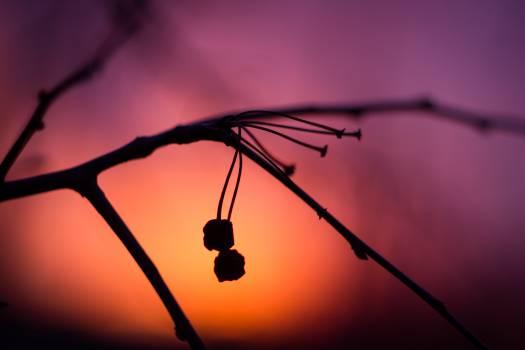 Insect Arthropod Mosquito #105328